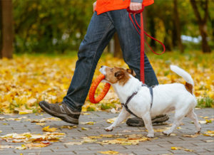 Fast Five Dog Training Program - Dog Trainer in Clarksville, TN